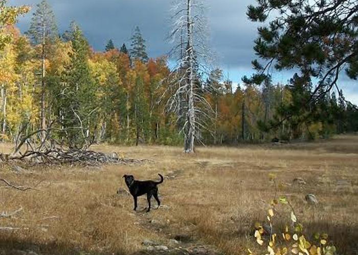 Dog-Friendly Rentals in North Lake Tahoe